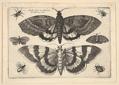 Two Moths and Six Insects etching, from Butterflies and Insects, Muscarum scarabeorum Wenceslaus Hollar (Wenzel Vaclav) (Bohemian, Prague 1607–1677 London), 1645, via Pyramid Power.