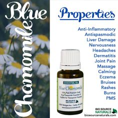 Blue chamomile, a powerful anti-inflammatory, is great for all-natural skin care!