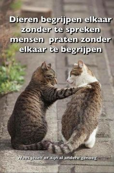 Funny Animal Memes Of The Day – 32 Pics – Lovely Animals World Lustige Tiermemes des Tages – 32 Bilder – Schöne Tierwelt Katzen Funny Animal Jokes, Funny Cat Memes, Cute Funny Animals, Funny Animal Pictures, Animal Memes, Cute Cats, Funny Cats, Silly Cats, Animal Quotes