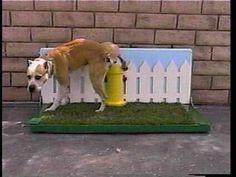 dog potty area - Google Search