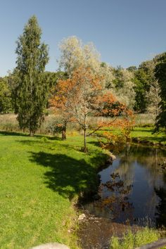 Piece autumn in August - null