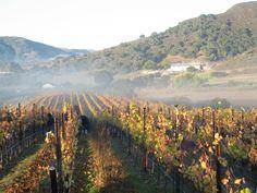 Santa Barbara California Vineyards