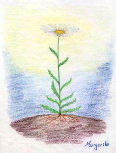 Waldorf ~ 5th grade ~ Botany ~ Daisy ~ main lesson book