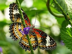 butterflies are natures artwork