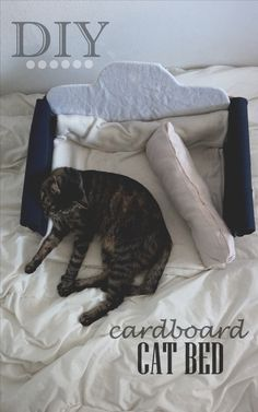 Do it yourself - carboard cat bed.  instagram & snapchat -> ochasia
