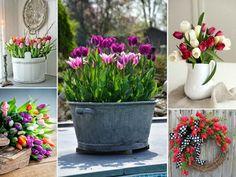 Flowers, Plants, Gardening, Decoration, Decor, Lawn And Garden, Decorations, Plant, Decorating