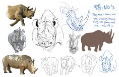 Rhino study by Suzanne-Helmigh on DeviantArt