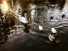 Buenas Tardes En El Parque 🇪🇸🔙🦆🌿 #walking #parque #nochebuena #christmaseve #lagodeloscisnes #jardines #real #december #23 #photo #afternoon #thinking #life #myfriend #missingyou #kiss #socialnetwork #pinterest #instagram #tumblr #twitter #peace #agua #swans #lake #lago #valencia #españa #back #myfriends