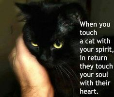 When you touch a cat with your spirit in return they touch your soul with their heart. Black cat love.