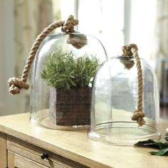 Greenhouse Cloche | Ballard Designs - Gardeners have used the glass cloche since the 15th century to protect young plants from the cold. Working cloches also act like miniature greenhouses to help develop tender seedlings. Ours are purely decorative and great for covering small plates or showcasing collectibles.    Greenhouse Cloche features:   Made of clear glass  Knotted rope handle  Polished silver finish fittings