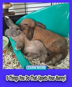 Rabbit bunny  Articles Watches Plays Happy Guys Children Smile Fur People Chinchillas Facts Link Love Animal Pictures God Winter Farms  Veggies Chinchilla Facts, Rabbit Behavior, Small Kittens, Happy Guy, Child Smile, House Rabbit, Guide Dog, Chinchillas, Budgies