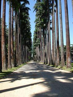 Jardim Botânico - Rio de Janeiro,Brazil,  by B r u N N o
