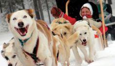 Lapland.  Saariselkä activities http://www.saariselka.com/individual/activities