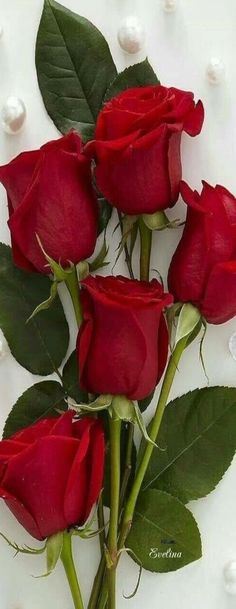 Red rose are for the beauty of a true real rose!!! Red rose give the love from all other roses and is given to a true and real person.