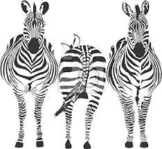 Three zebras standing