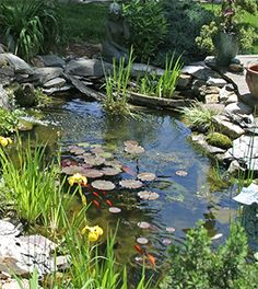 Water Garden, Fish & Plants JUST the right size of pond use what we have to achieve this