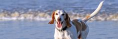 Keep your dog in your Florida travel plans by heading to one of these 15 dog friendly beaches.