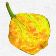 HABANERO YELLOW Hot Pepper Seeds - 10 seeds - Chilli Pepper Seeds #hotpepperseeds #hotpeppers #seeds #hotpepper #peppers