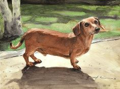 Dachshund Clube - Mike Theuer