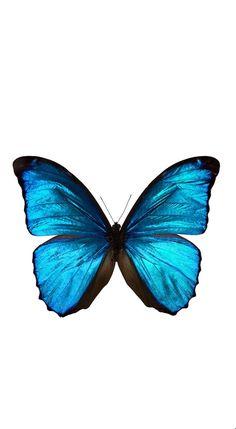 Wallpaper iphone blue wallpapers 33 Ideas for 2019 Blue Butterfly Wallpaper, Pastel Wallpaper, Tumblr Wallpaper, Blue Wallpapers, Butterfly Art, Butterflies, Iphone Wallpapers, Butterfly Background, Desktop Backgrounds