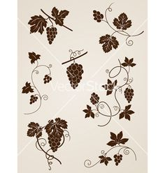 Decorative grape vine elements vector 789830 - by Artspace on VectorStock®