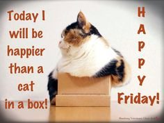 Happy Friday! Today I will be HAPPIER than a cat in a box!