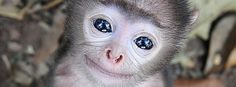 The 29 Most Unbelievably Adorable Baby Monkeys In The World