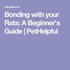 Bonding with your Rats: A Beginner's Guide | PetHelpful