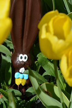 "Ears thinks he can hide in our flower garden, but his 9"" ears give him away every time. #allears #Easter"