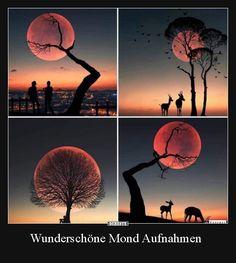 For moon lovers 🌕❤️ Moon Photography, Creative Photography, Beautiful Moon, Beautiful World, Cool Pictures, Beautiful Pictures, Animal Pictures, Moon Lovers, Ciel