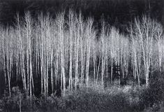 Jean-Bernard Cabana offers up a blog called the World Surrounding Me and I happened upon this article: Trees- Study in Black and White Contrast vs. Ansel Adams trees ... I often times wonder how many of todays modern photographers have ever used film. It truly gives you an appreciation of the works of great masters such as Ansel Adams…