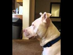 Loving dog needs foster/rescue now