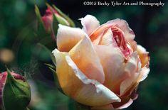 Pink Rose Fine Art  Photo Print by BeckyTylerArt on Etsy