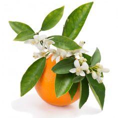 recette pour fabriquer soi même Lotion micellaire à la fleur d' oranger pour enfants, bébés et mamans