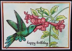 Stampendous Hummingbird stamp set and Matching die set. On watercolour paper with bird on gloss card.