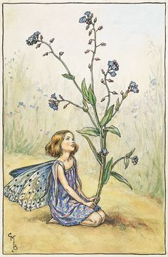 The Fairies of The Summer Archives - Flower Fairies - Forget-me-not Fairy - Cicely Mary Barker