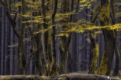 Speulder Magic - Speulder Forest, Netherlands  Follow me on Instagram https://www.instagram.com/larsvandegoor/