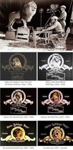 MGM Lion... Being a Leo I am very proud of this one! How does it get any better than that?!