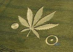 Crop Circle...groovy
