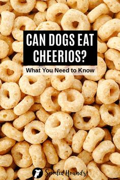 Can dogs eat Cheerios? Keep your dog safe and find out what you need to know about dogs eating Cheerios cereal. Cheerios Cereal, Honey Nut Cheerios, Foods Dogs Can Eat, Nutrient Rich Foods, Diabetic Dog, Eating Organic, Dog Eating, New Flavour, Dog Food Recipes