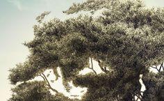 Olive Olive Oil, Illustration, Photography, Outdoor, Outdoors, Photograph, Fotografie, Photoshoot, Illustrations