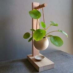 Hanging Plants, Indoor Plants, Indoor Gardening, Indoor Plant Stands, Organic Gardening, Hanging Succulents, Greenhouse Gardening, Hanging Baskets, Vegetable Gardening