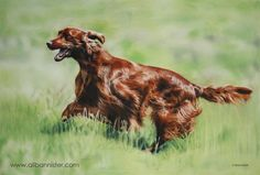 JETHRO, pastel on pastel card by Ali Bannister. For limited edition prints and information on commissions see: www.alibannister.com
