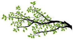 Find Tree Branch Green Leaves Over White stock images in HD and millions of other royalty-free stock photos, illustrations and vectors in the Shutterstock collection. Leaf Silhouette, Silhouette Images, Silhouette Vector, Black Silhouette, Blossom Tree Wedding, Palm Tree Tattoo Ankle, Small Palm Trees, Dry Tree, Bouquets