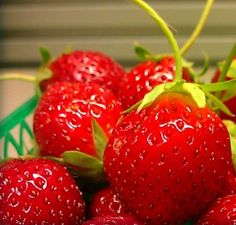 Mara Des Bois French Everbearing Strawberry 25 Plants - BEST FLAVOR! - Bare Root