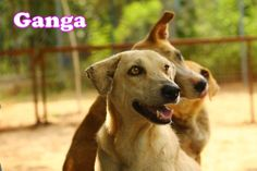 Ganga is with us from last many years. She is just like a mature elder woman.