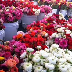 Rununculus flowers at the farmers market! Obsessed!