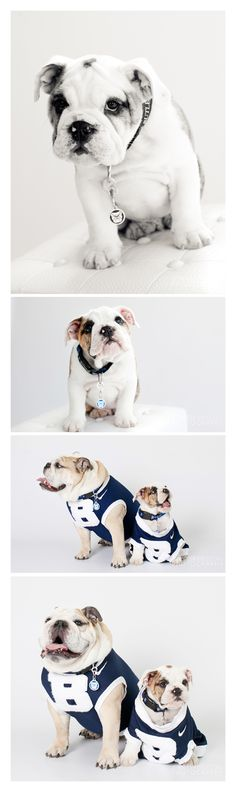 the awesome butler university mascots! so cute! Found on pinterest. Cc: @Butler Blue II