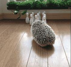 Strike | Hedgehog