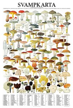Important to have and lots of fun to pick mushrooms in Sweden. Learn Swedish, Mushroom Fungi, Science And Nature, Botanical Illustration, Survival Skills, Botanical Prints, Natural History, Flora, Stuffed Mushrooms